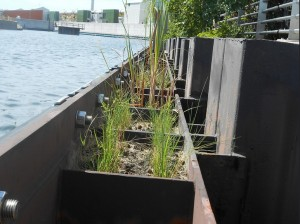 Cordgrass planted in installed wetland frame.