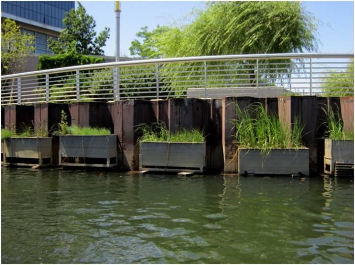 wetland frames